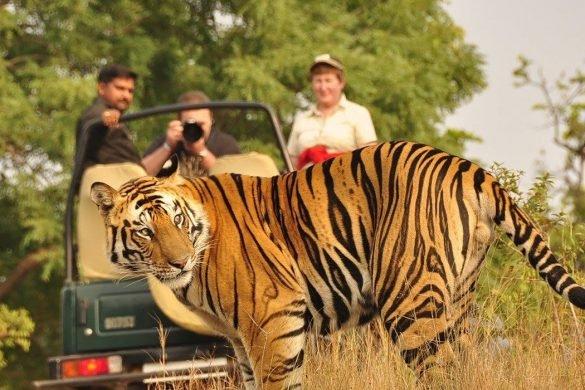 Safari στην Ινδία