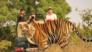 Safari In India