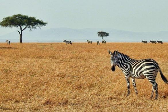 Διακοπές στην Αφρική