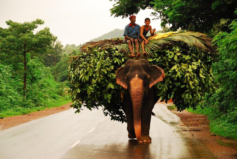 goa elephant india